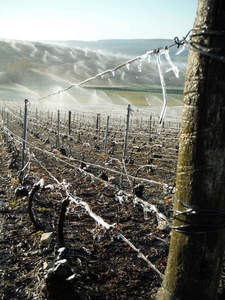 Arrosage des vignes pour lutter contre les gelées de printemps