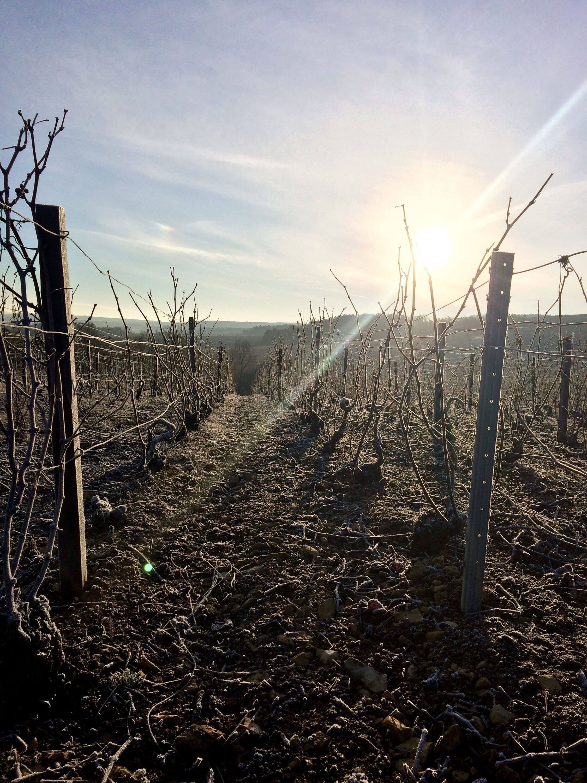 Vignoble au cours d'une journée d'hiver ensoleillée